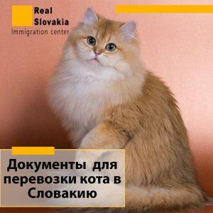 Перевозка кошек через границу